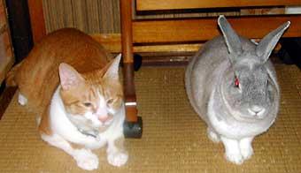 猫とうさぎ