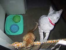 猫の脱走防止簡易柵