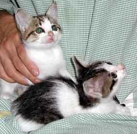 見上げる子猫たち