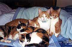 布団に集まる猫たち