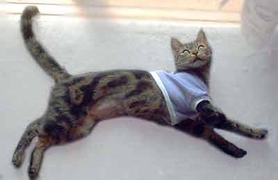 ちびTシャツを着た猫