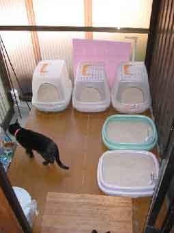 猫専用トイレ部屋