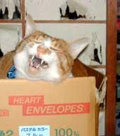 猫とやぶれ障子