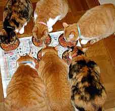 猫たち食事中