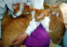 膝の順番待ちをする猫たち
