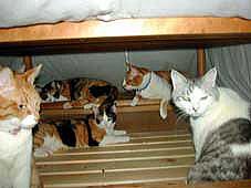 炬燵に潜る猫たち