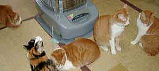 ストーブに集まる猫たち