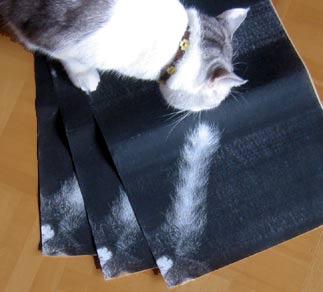 猫とコピー用紙