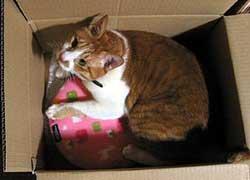 猫とレンジでチンしてポッカポカ