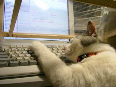 猫パソコン
