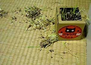 散らかった猫草