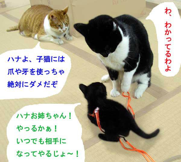 子猫と大人猫達