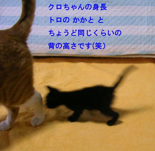 子猫と大人猫