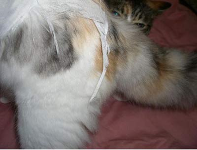 猫 切れてしまった保護服
