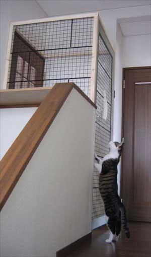 猫用二重ドア
