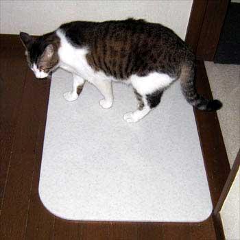 猫と大理石板