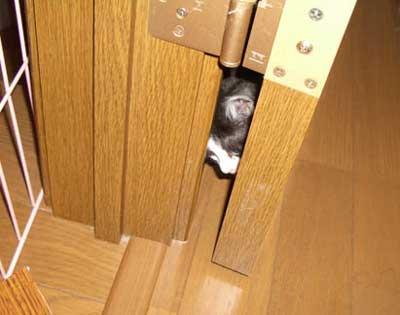 ドア指挟み対策1