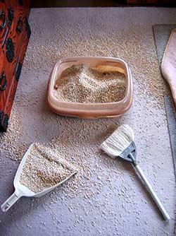 砂が飛び散った猫トイレ