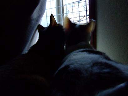 猫たち喜んで外を見る