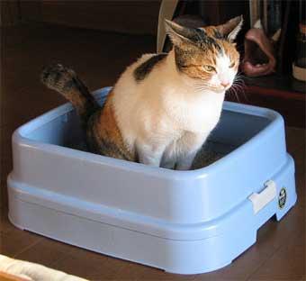 猫トイレ中
