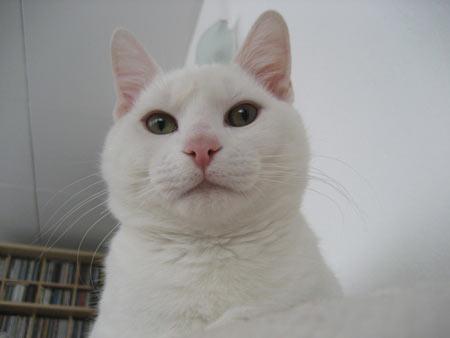 猫写真:うどんさん