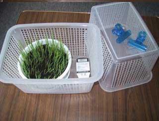 猫草の育て方コツ