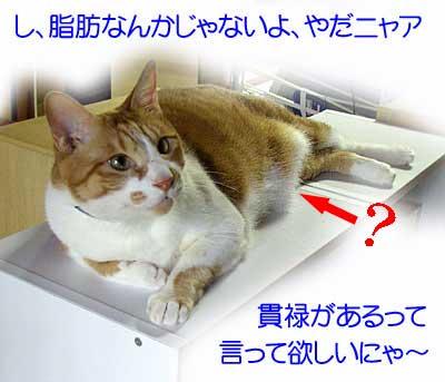 デブ猫トロの画像
