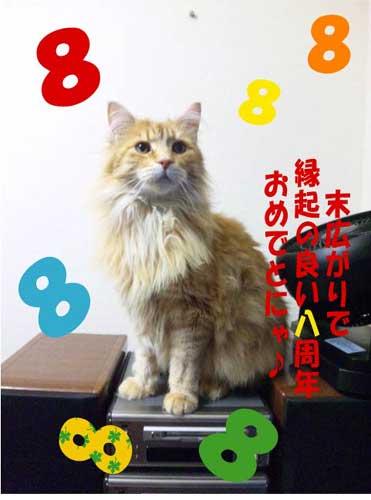 猫本8周年記念画像