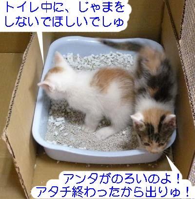子猫たちトイレ中