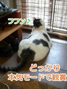猫の玄関脱走防止策