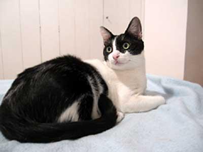 猫写真:なるとちゃんアフター