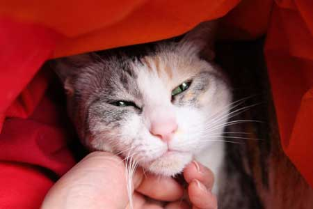 猫写真:モネちゃん
