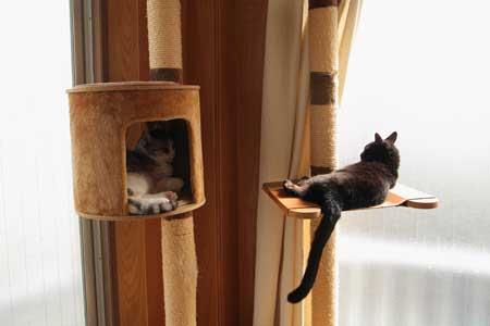 猫写真:モネちゃん、あかりちゃん