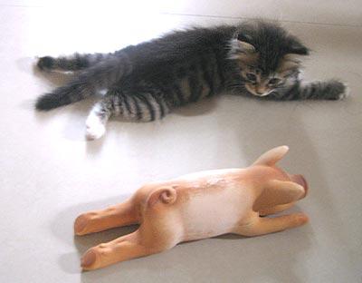 猫画像・ジンジャーちゃん・ビフォー