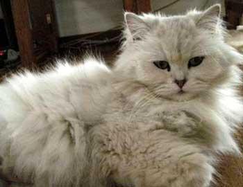 猫的ビフォーアフター:モコちゃん1