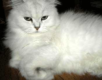 猫的ビフォーアフター:モコちゃん2