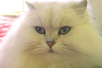 猫的ビフォーアフター:モコちゃん3