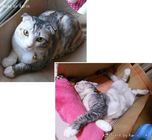 手作り猫専用コタツ