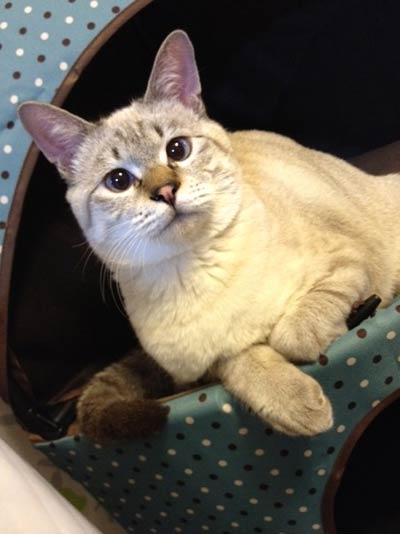 猫画像 ビフォーアフター