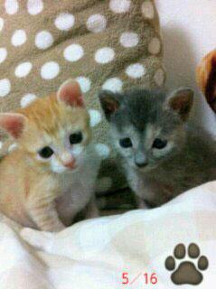 子猫:チョコちゃんとマロンちゃん
