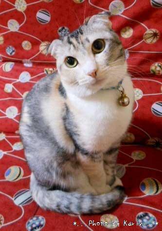 猫画像:ゆずちゃん