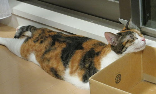 猫画:リューバちゃん