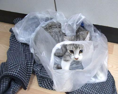 猫画像:ゆずり葉ちゃん