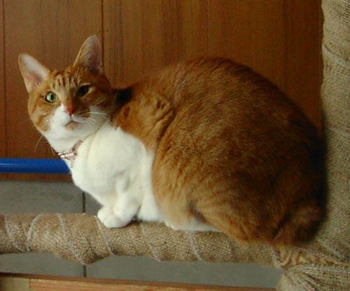愛猫チャトラン