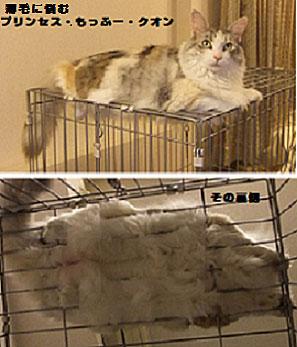 猫画像:クオンちゃんの豪華でもっふもふなお腹