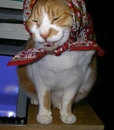 頬かむりした猫