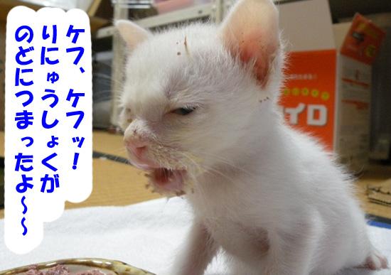 赤ちゃん猫のお顔が離乳食まみれ
