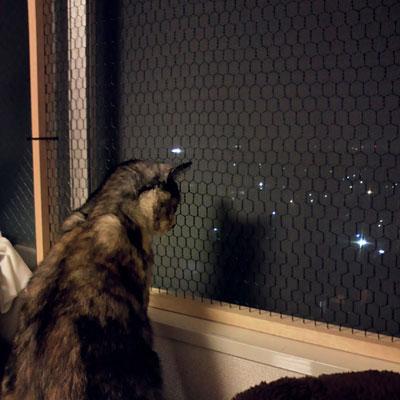 猫 脱走窓