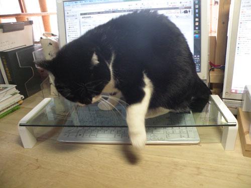 猫対策 キングジム デスクボード