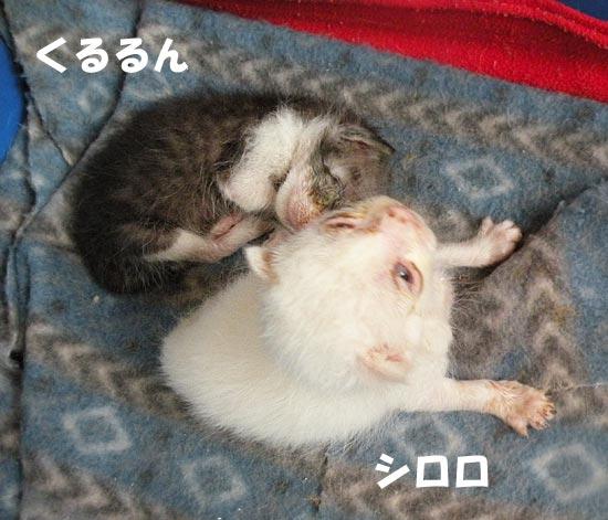 子猫 ビフォー